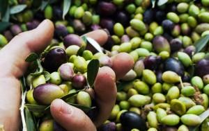 MEGARITHIKI  Olives